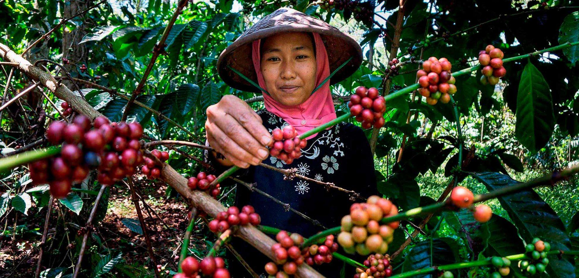 alliance vending distribuidor de café de comercio justo con certificación fairtrade